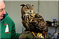 ST1776 : Eagle Owl with his handler : Week 15