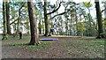 SU2694 : Wire-walking, Badbury Clump, near Faringdon by Brian Robert Marshall