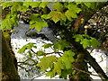 SE0063 : Spring greenery by Linton Falls : Week 17