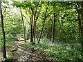 SJ3570 : Bridge in Dingle Wood by Sue Booth