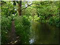 TQ0375 : River Colne by Alan Hunt