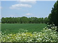 TF4309 : Crop field and woodland by JThomas