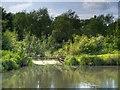 SJ5396 : Stanley Bank, St Helens (Sankey Canal) by David Dixon