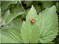 ST6167 : Ladybird love by Neil Owen