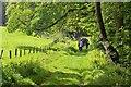 NS1158 : Path through woodland, Mount Stuart : Week 21