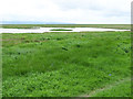 SJ2778 : Salt marsh at Parkgate by Oliver Dixon