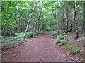 TM4667 : Path in woodland near Westleton Walks, RSPB Minsmere by Roger Jones