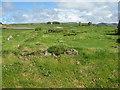 NR3868 : Eilean Mòr at Finlaggan by M J Richardson
