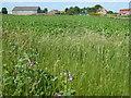 TL5687 : Near Fenway Farm in Littleport by Richard Humphrey
