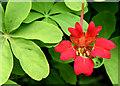 J3372 : Red flower, Botanic Gardens, Belfast (June 2014) by Albert Bridge