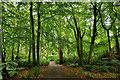 NR6447 : Woodland,  Achamore Gardens : Week 25