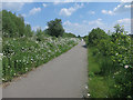 TL3569 : Cycleway along guided busway by Hugh Venables