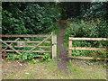 TL1696 : Orton Longueville Wood by Michael Trolove