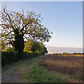 TL4755 : A summer evening at Netherhall Farm by John Sutton