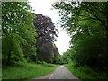 SU6225 : Copper beech, Brockwood Bottom by Christine Johnstone