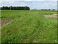 TL3291 : Plantation Farm near Benwick by Richard Humphrey
