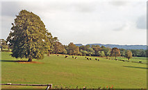 SJ5365 : Cheshire countryside southward of Willington Hall Hotel, 1990 by Ben Brooksbank
