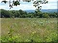 SX4170 : Sylvia's Meadow, St Ann's Chapel by Robin Drayton