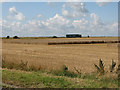 TL5459 : Harvest time by the A14 by John Sutton