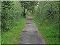 SU8673 : Hazelwood Lane by Alan Hunt
