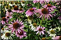 SP9081 : Flowers in Boughton Park by Philip Halling