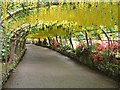 SH8072 : Laburnum arch Bodnant Garden in bloom by Richard Hoare