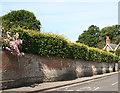 SZ3295 : Crinkum-crankum Wall by Anne Burgess
