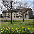 NJ9006 : Council flats with daffodils by Bill Harrison