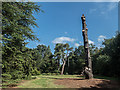 TQ0658 : Remains of Pine Tree, Royal Horticultural Society Garden, Wisley by Christine Matthews