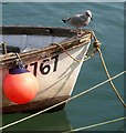 SX2553 : Boat and gull, West Looe : Week 37