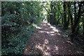 TL0753 : Footpath through the Plantation by Philip Jeffrey