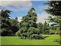 ST6376 : Tree, Oldbury Court by Derek Harper
