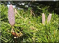 ST6376 : Cones, Oldbury Court by Derek Harper