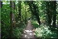 SU9085 : Thames Path by N Chadwick