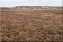 SD9435 : Heather moorland above Greave Clough by Bill Boaden