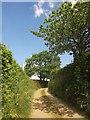 SX2962 : Lane near Bodway by Derek Harper