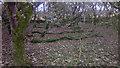 HP6209 : Halligarth plantation, Baltasound by Mike Pennington