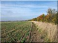 SK9352 : Stubble field with growing crop : Week 41