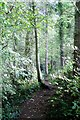 NT9350 : Woodland path by David Chatterton