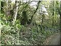 SM8833 : Ruin near Abermawr by Martyn Harries