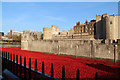 TQ3380 : Poppies at the Tower : Week 43
