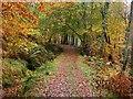 NM9641 : Path from the Footbridge : Week 43