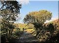 SX3866 : Lane near St Mellion by Derek Harper
