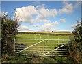 SX3766 : Pasture near Dunstan Quoin by Derek Harper
