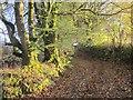 SX3969 : Track near Barret's Mill by Derek Harper