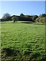 SX0048 : Hillside grazing by JThomas