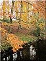 SE1664 : Beech leaves, Glasshouses by Derek Harper