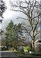TQ3472 : Trees, Peckarmans Wood by Stephen Richards