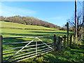 SO4604 : View across a field to the wooded hillside, Llanvair, near Llanishen : Week 48