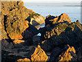NH7458 : Rocks on the Rosemarkie shore : Week 48